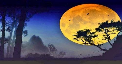 "Nescis quid vesper (serus) vehat: ""Kamu tidak tahu apa yang akan dibawa oleh malam yang larut"""